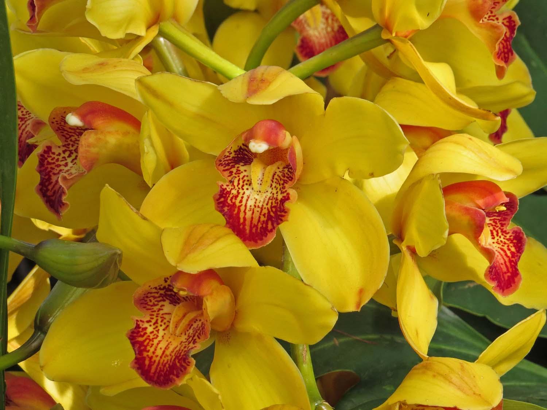 Orchid 1500 3-29-2017 176PP.jpg