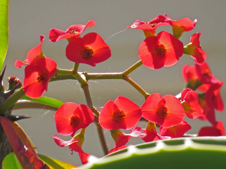 Orchid 1500 3-29-2017 187P.jpg