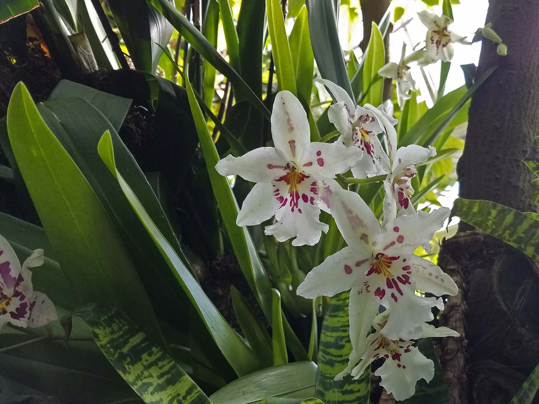 Orchid 1500 20170312_163518P.jpg