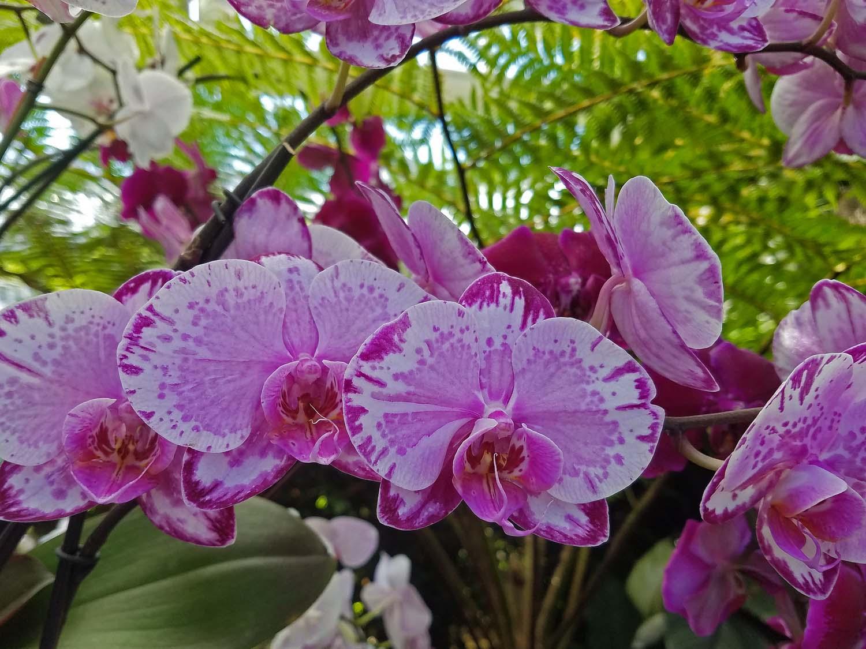 Orchid 1500 20170329_143437P.jpg