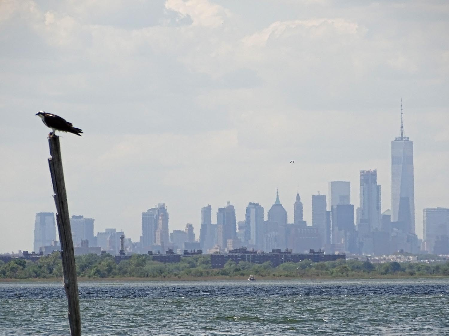 At Broad Channel Park, the osprey nest has a magnificent backdrop!