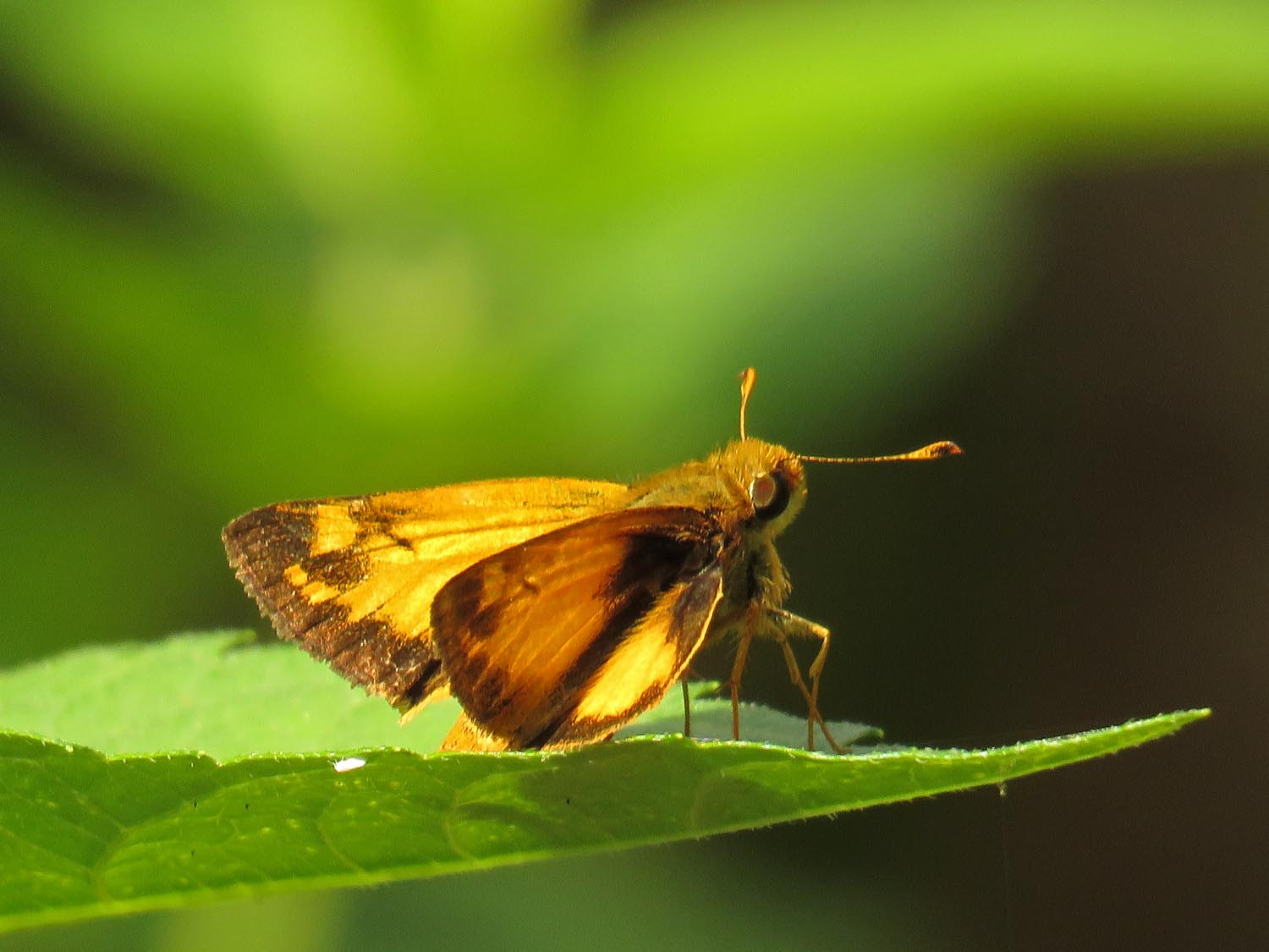 A skipper on Governors Island, Aug. 6, 2017