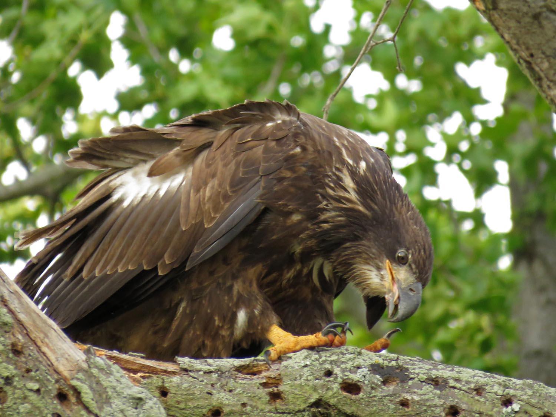 Eagles 1500 8-11-2017 394P.jpg