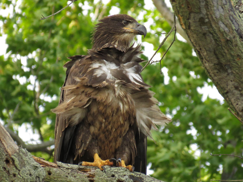 Eagles 1500 8-11-2017 409P.jpg
