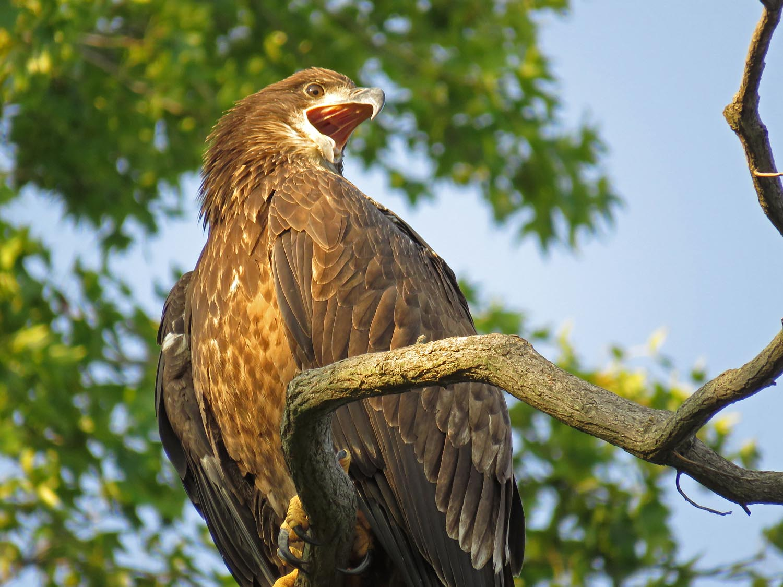 Eagles 1500 8-20-2017 436P.jpg