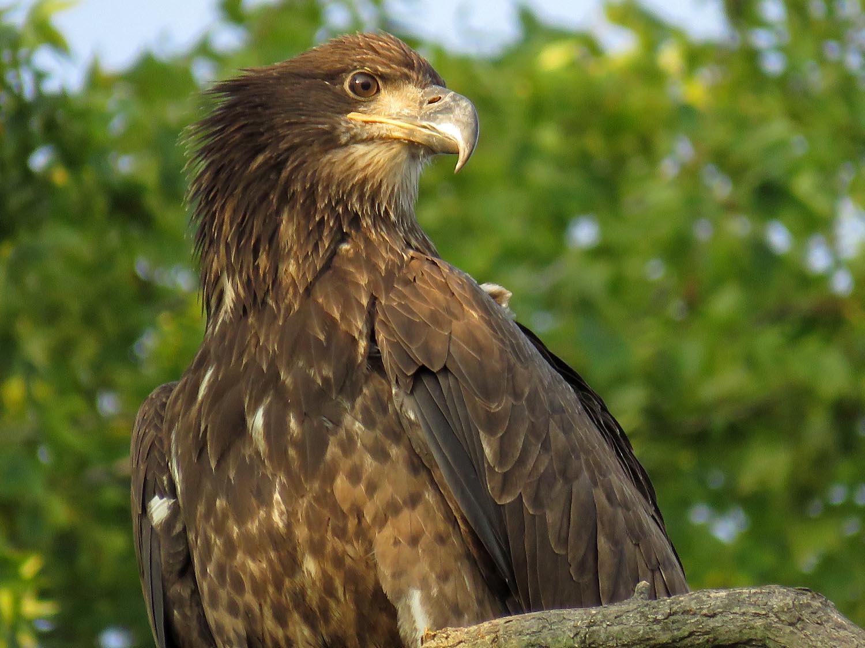 Eagles 1500 8-20-2017 469P.jpg