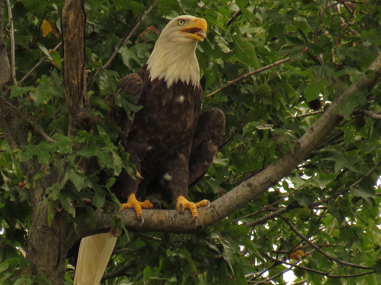 Eagles 1500 8-25-2017 256P.jpg