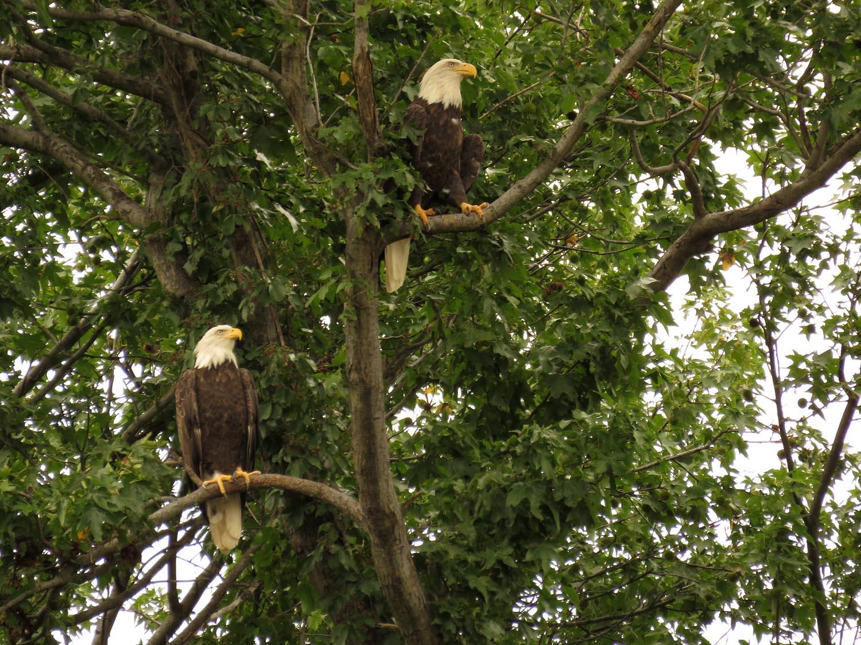 Eagles 1500 8-25-2017 267P.jpg