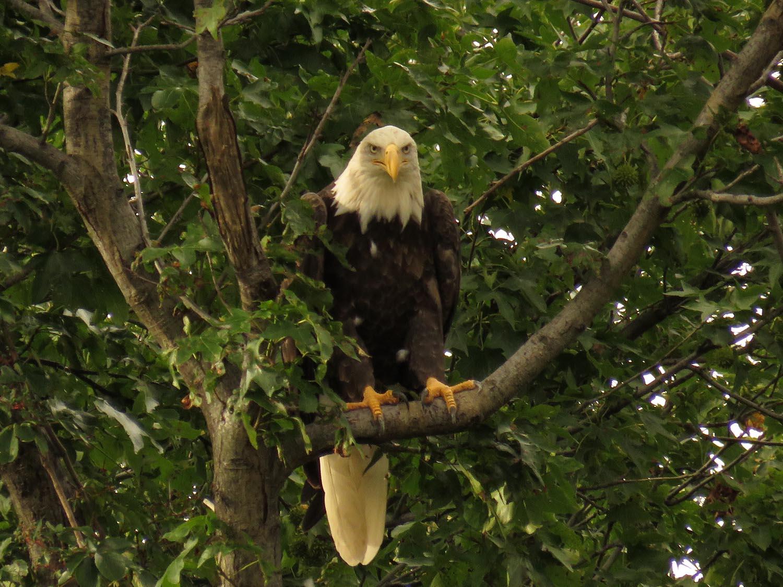 Eagles 1500 8-25-2017 293P.jpg