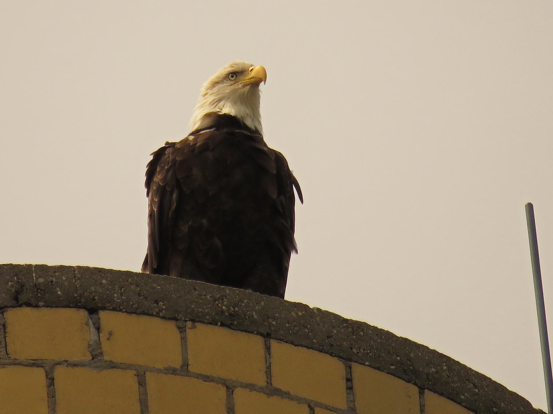 Eagles 1500 8-27-2017 097P.jpg