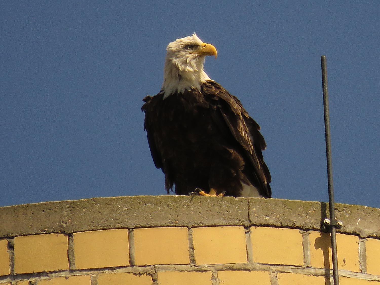 Eagles 1500 9-1-2017 076PP.jpg