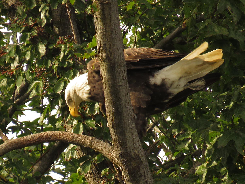 Eagles 1500 9-1-2017 108P.jpg