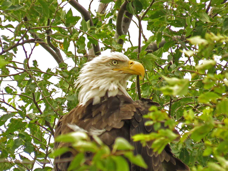 Eagles 1500 8-11-2017 141P.jpg