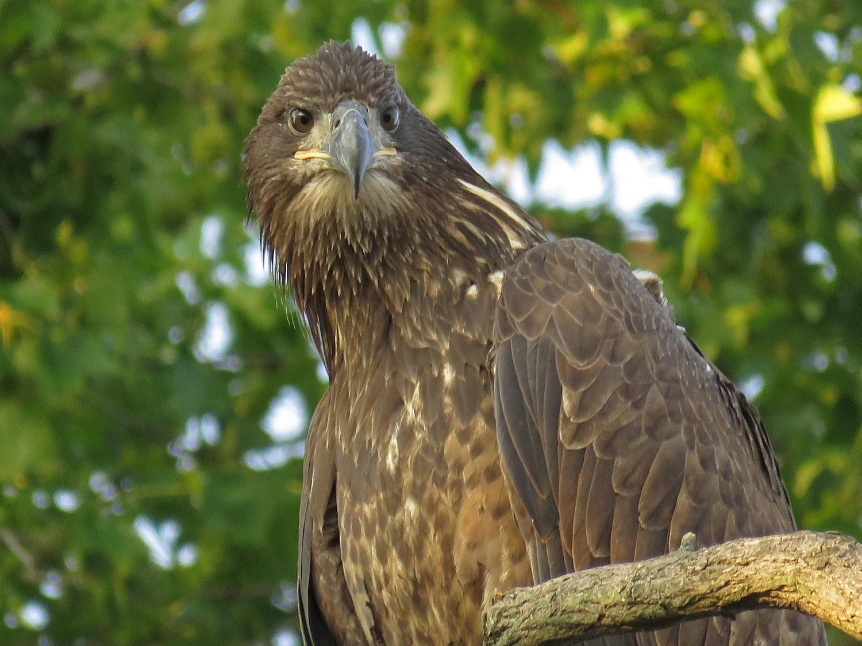 Eagles 1500 8-20-2017 492P.jpg