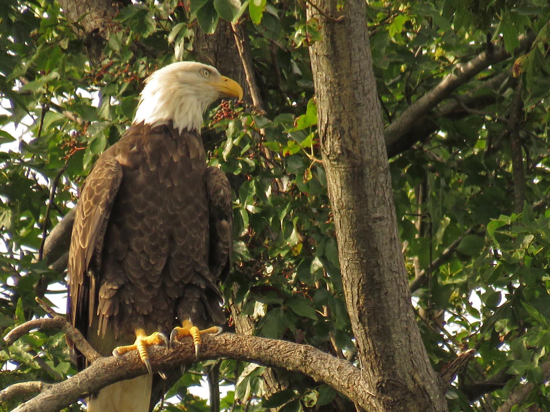 Eagles 1500 9-1-2017 110P.jpg