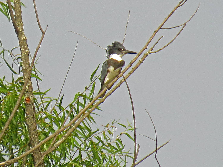Kingfisher 1500 8-11-2017 288P.jpg