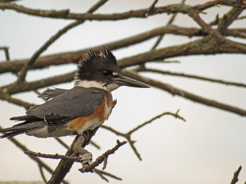Kingfisher 1500 9-30-2017 098P.jpg