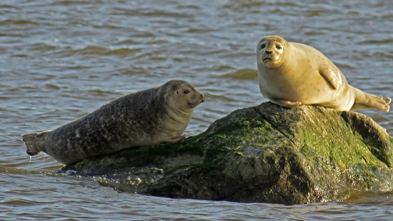 Seals 1500 1-31-2018 SI 166P.jpg