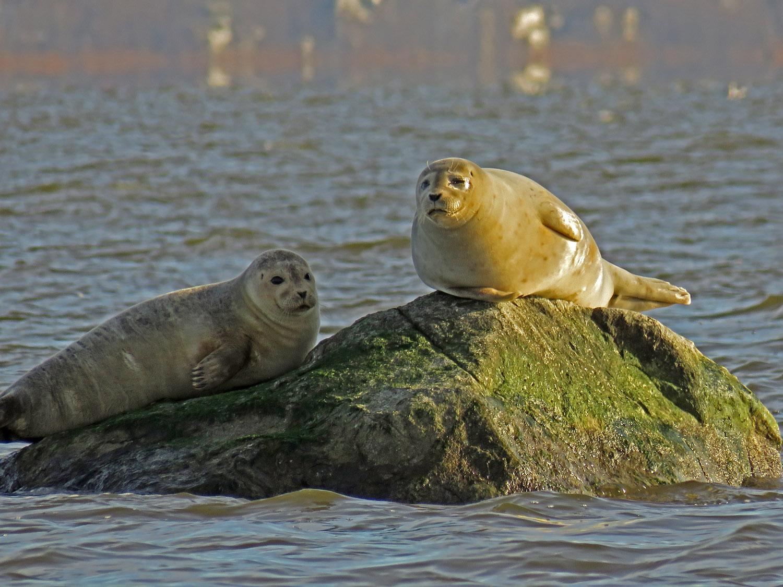 Seals 1500 1-31-2018 SI 161P.jpg