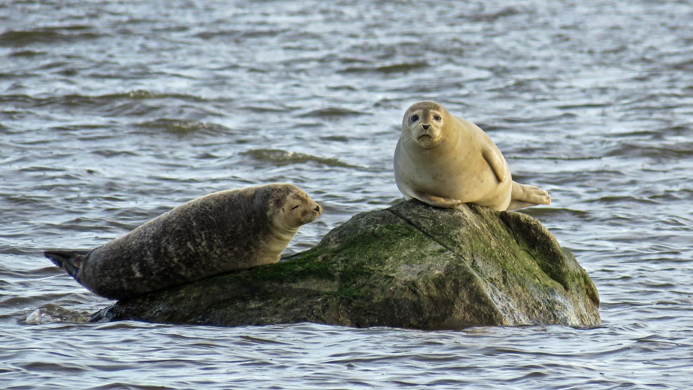 Seals 1500 1-31-2018 SI 190P.jpg