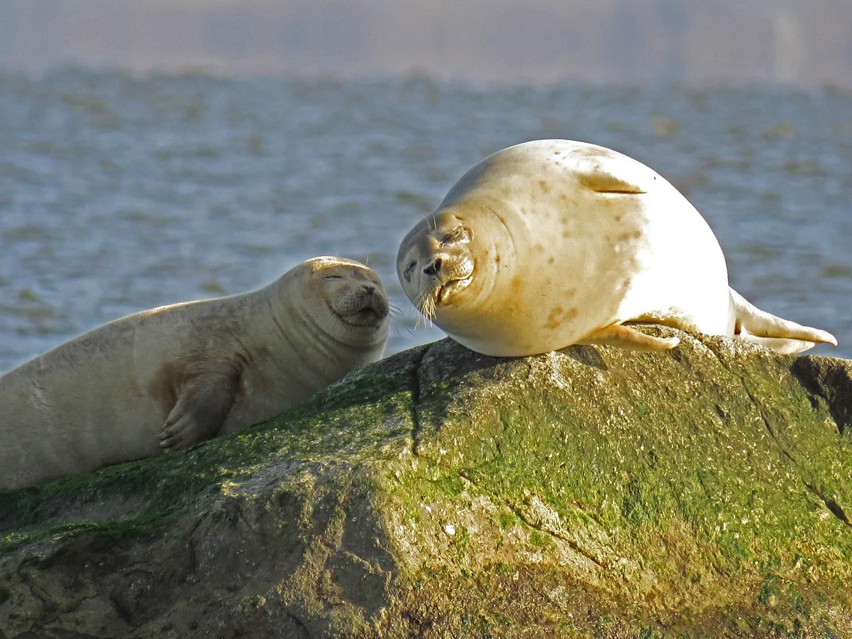 Seals 1500 1-31-2018 SI 100P.jpg