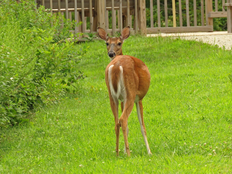 Deer 1500 8-11-2017 244P.jpg