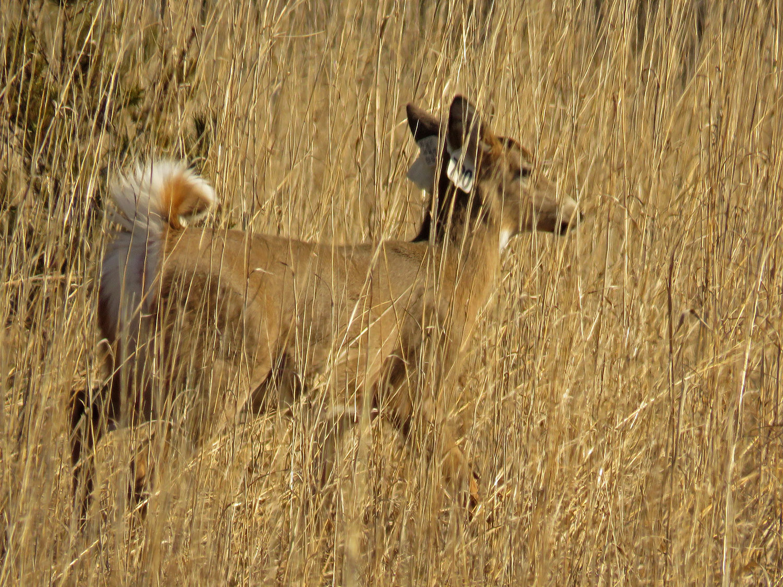 Deer 1500 1-26-2018 SI 042P.jpg