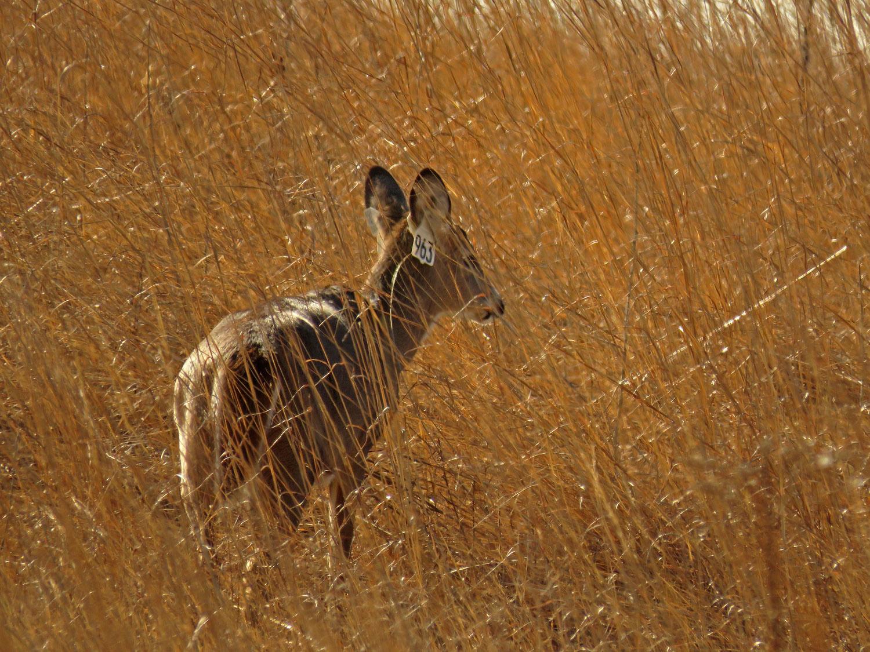 Deer 1500 1-26-2018 SI 049P.jpg