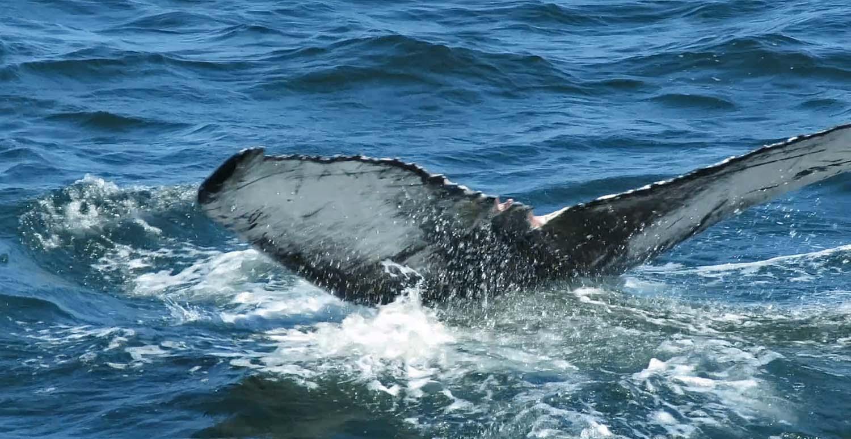 Whale 1500 8-23-2018 9.jpg