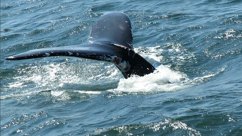 Whale 1500 8-23-2018 5.jpg