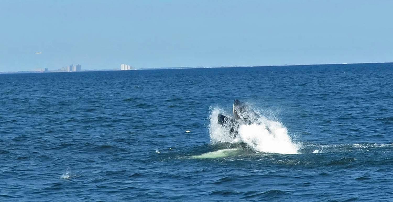 Whale 1500 8-23-2018 7.jpg