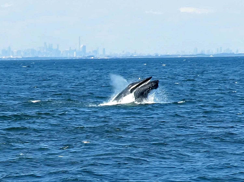 Whale 1500 3.jpg