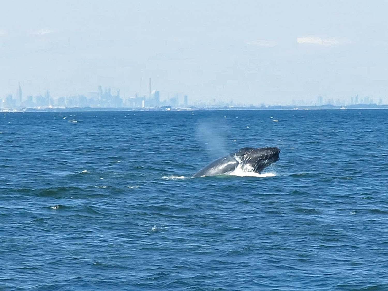 Whale 1500 2.jpg