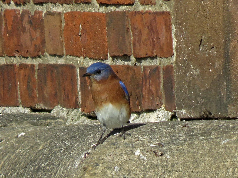 Bluebird 1500 10-31-2018 GI 238P.jpg