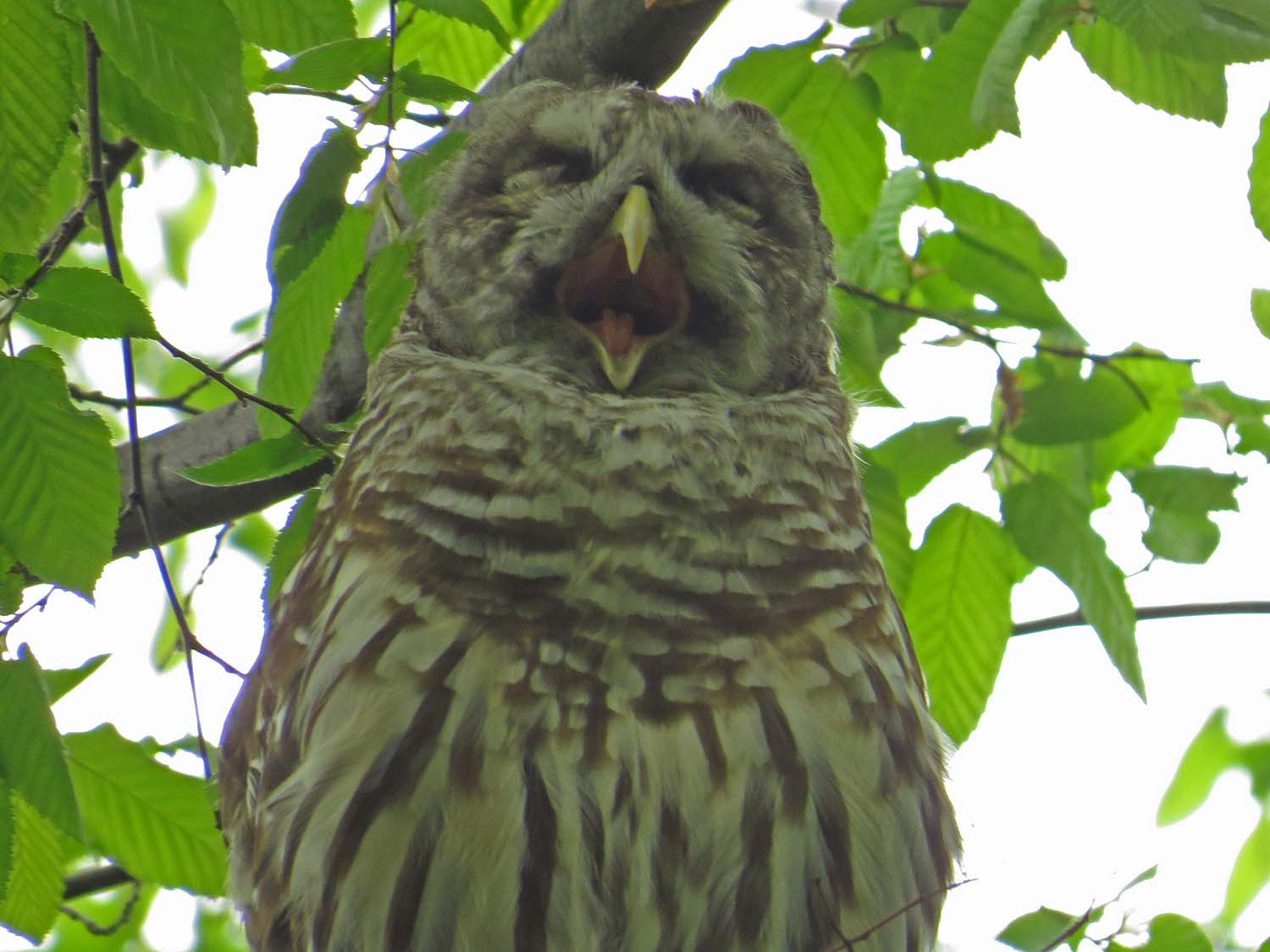 """""""The night to th' owl and morn to th' lark less welcome. """" — Cymbeline"""