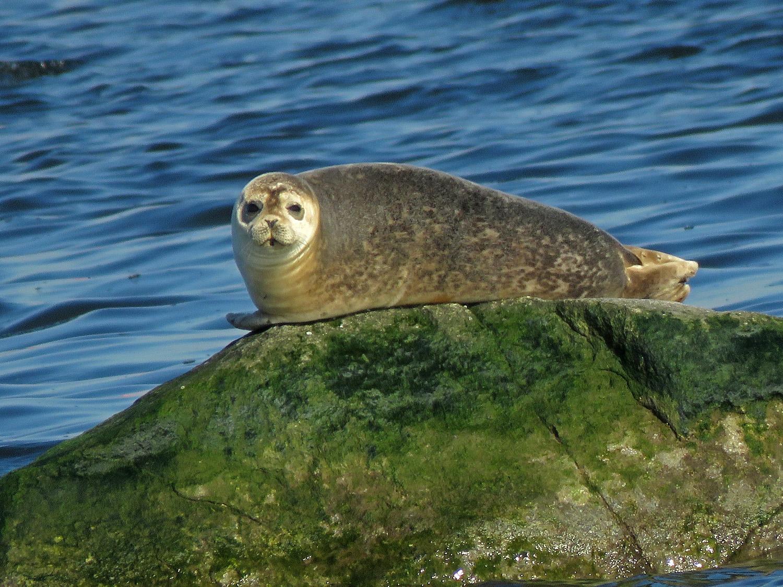 Seal 1500 3-9-2019 SI 050P.jpg