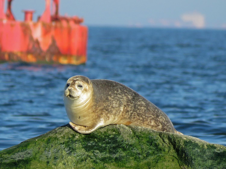 Seal 1500 3-9-2019 SI 064P.jpg