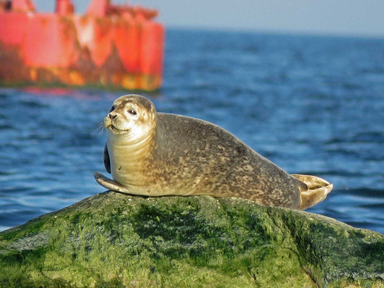 Seal 1500 3-9-2019 SI 133P.jpg