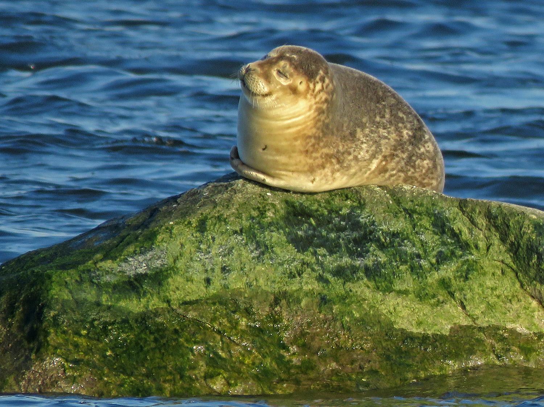 Seal 1500 3-9-2019 SI 176P.jpg