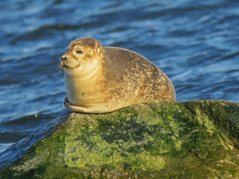 Seal 1500 3-9-2019 SI 189P.jpg