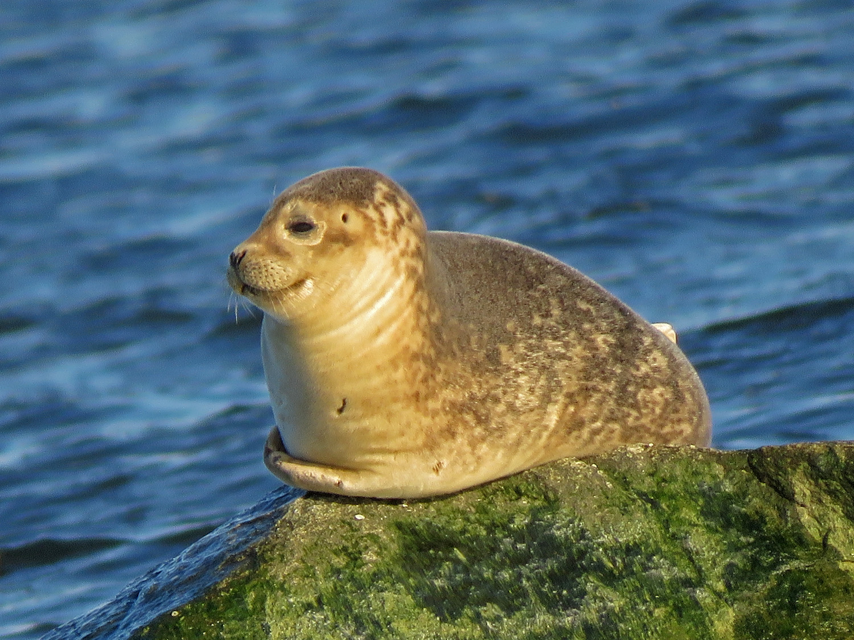 Seal 1500 3-9-2019 SI 194P.jpg