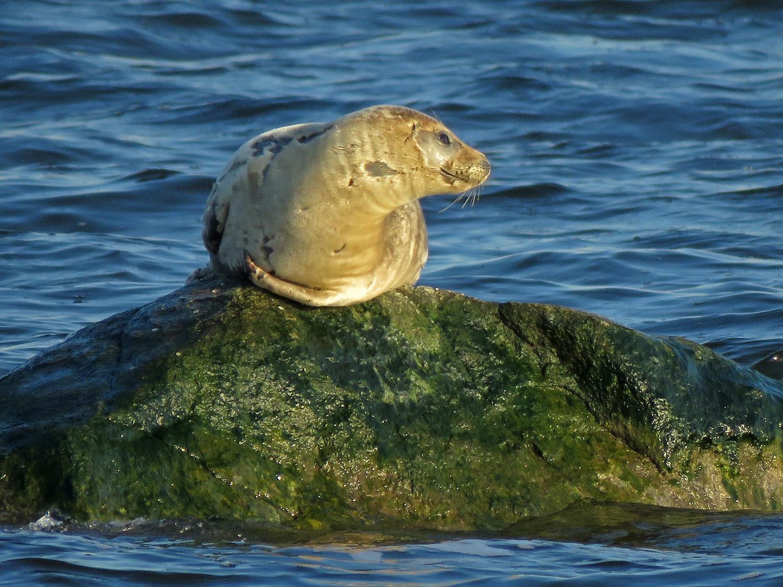 Seal 1500 3-9-2019 SI 217P.jpg