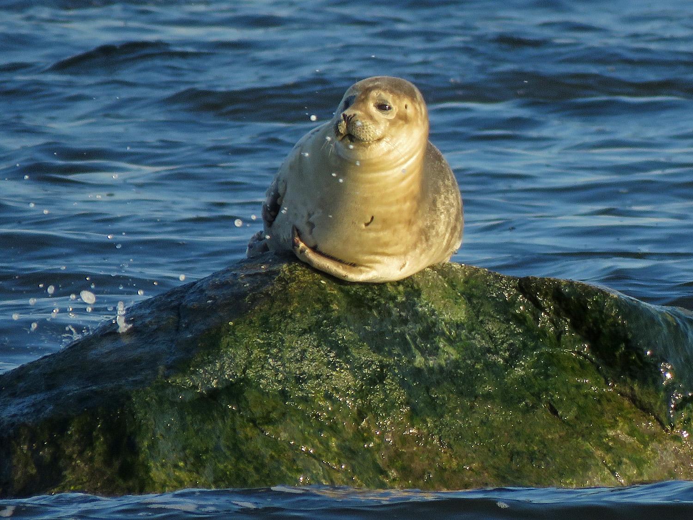 Seal 1500 3-9-2019 SI 219P.jpg
