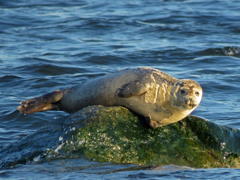 Seal 1500 3-9-2019 SI 232P.jpg