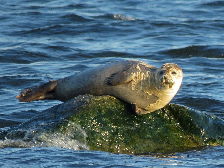 Seal 1500 3-9-2019 SI 233P.jpg