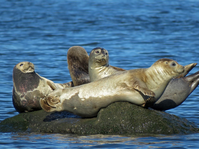 Seals 1500 3-26-2019 SI 208P.jpg