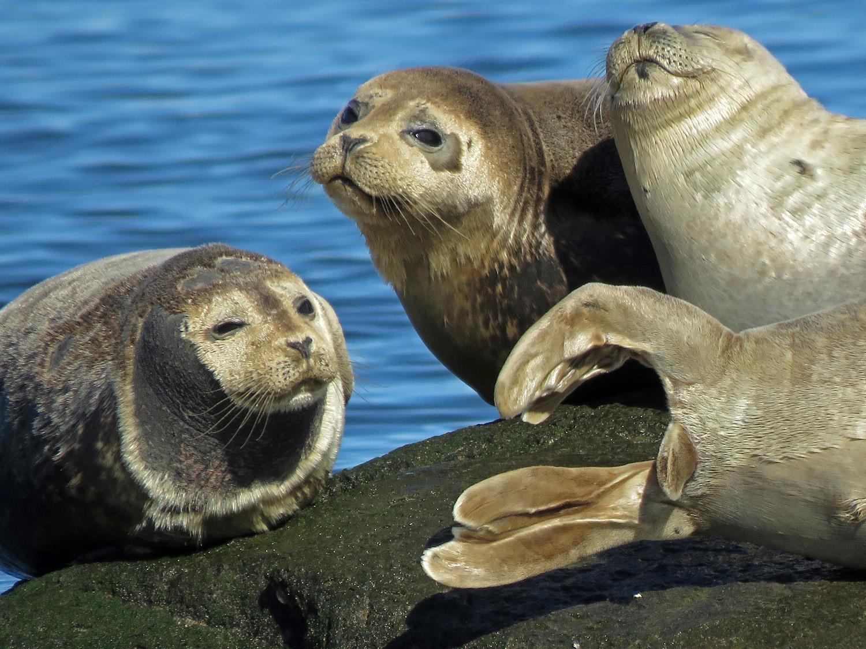 Seals 1500 3-26-2019 SI 220P.jpg