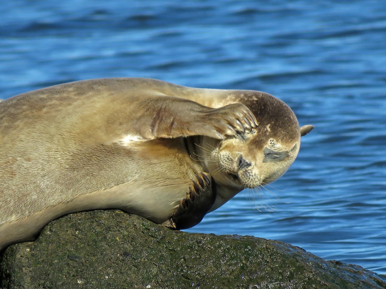 Seals 1500 3-26-2019 SI 227P.jpg