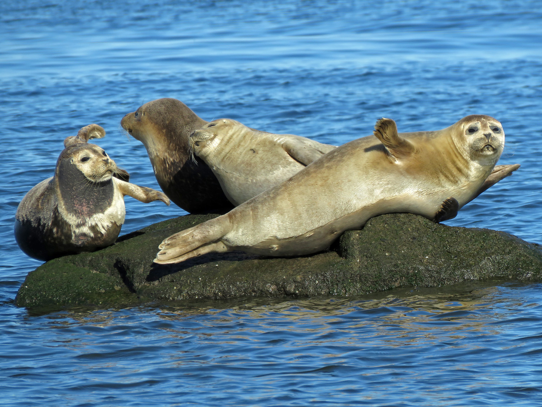 Seals 1500 3-26-2019 SI 230P.jpg
