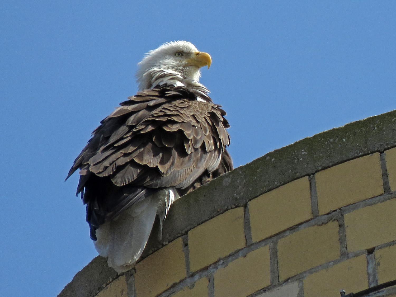 Eagle 1500 4-2-2019 SI 009P.jpg